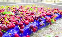 bulk fruit juice concentrates